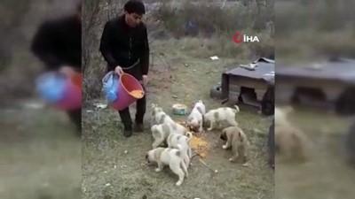 ogretmen -  Aç kalan köpekler için seferberlik