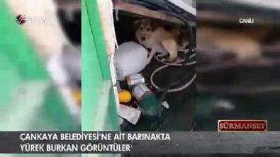 Çankaya Belediyesi'ne ait barınakta yürek burkan görüntüler