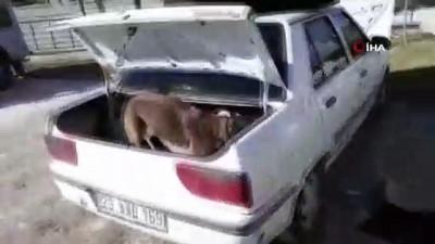uyusturucu madde -  Otomobilin kornasından uyuşturucu çıktı