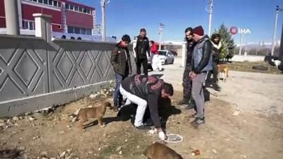 Motosiklet kulübü üyelerinden 'Sokak hayvanları aç kalmasın' etkinliği