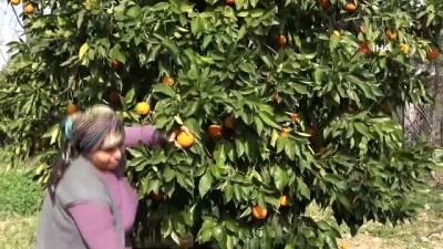 asad -  Gaziantep baklavasına turunç tatlısı ile meydan okuyorlar