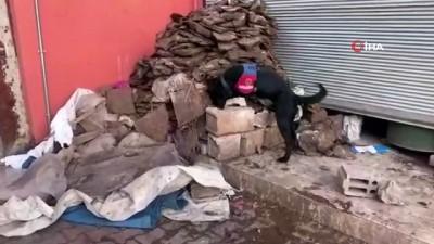 narkotik -  Narkotik köpeği tezek yığınları arasına saklanan uyuşturucu hapları buldu