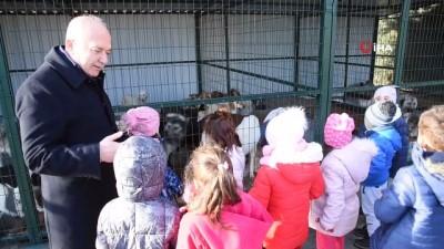 Dursunbey'de başıboş hayvanlar ıslah edilecek