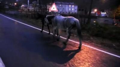 Gürcistan sınırını geçen atların içler acısı hali