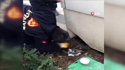 Veteriner kliniği çıkışı sahibinden kaçarak panoya saklanan ev kedisini itfaiye kurtardı