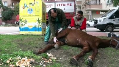 Dere kenarına terk edilen at tedavi edilecek
