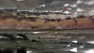 Kağızman'da aç kalan kurt köye kadar indi