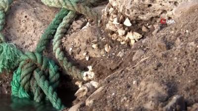arastirmaci -  Van Gölü Havzası'nda yabancı tür tehlikesi
