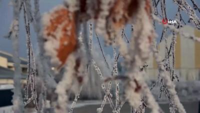 Görüntüler masallar diyarından değil Ardahan'dan...Buz tutan ağaçlar görsel şölen oluşturdu