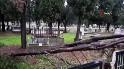 Karacabey'de fırtına ağaçları devirdi