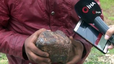 Odun toplarken buldu, fotoğrafını çekip bilim adamlarına attı