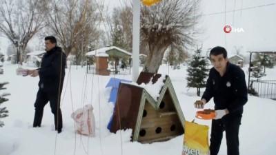 Şuhut Belediyesi sokak hayvanlarını unutmadı