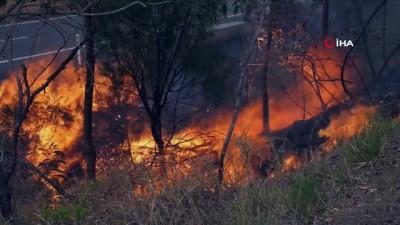 - Kanguru Adası'nın üçte biri yandı - Adada ekolojik trajedi yaşanıyor