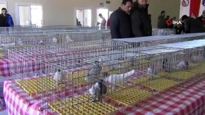 sayilar -  Güvercinler birinci olmak için yarıştı