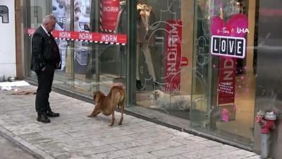 Soğukta üşüyen köpek mağazanın sıcak kliması altına sığındı
