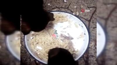 ormanli -  Zehirlenerek telef olan yavru köpeklerin son görüntüleri ortaya çıktı