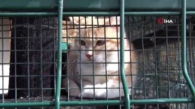 Mersin Büyükşehir Belediyesi, Çorum'dan Mersin'e getirilen 30 kediyi misafir ediyor