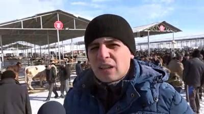 kisla - Soğuk hava Şarkışla Hayvan Pazarı'nı da olumsuz etkiledi - SİVAS