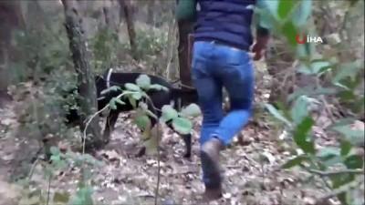 ormanli -  Büyükşehirleri kana bulamak için eylem hazırlığındaki PKK/KCK terör örgütü mensubu 4 kişi tutuklandı