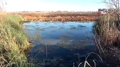 Bir zamanlar kuş cenneti olan 'Yamansaz' atık ve kirlilik tehdidi altında