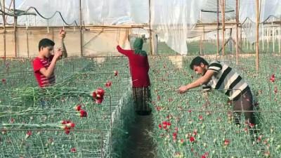 yurt disi - Türk çiçeği 50 ülkenin kadınları için hazırlanıyor - ANTALYA