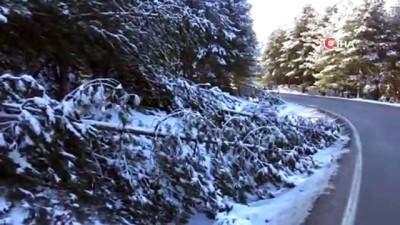 ormanli -  Kar ve fırtına ağaçları kırdı