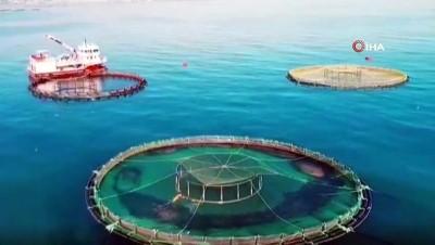 Gürdoğan: Doğu Karadeniz'den su ürünleri ihracatındaki artışı karşılamak için yeni yatırımlar yapmak gerekiyor'