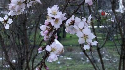 benin -  Elazığ'da bahar havası, ağaçlar çiçek açtı