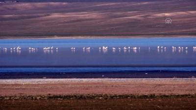 Düden Gölü'nün misafirleri flamingolar geldi - KONYA