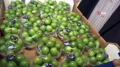 Turfanda erik kilosu 750 liradan satışa çıktı