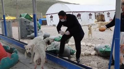 koronavirus - Çubuk Belediyesi sokak hayvanlarını unutmadı - ANKARA