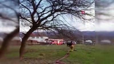 Tarihi çınar ağacı alevlere teslim oldu