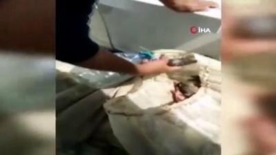 kacak avci -  Jandarma kaçak avlanan balıkları kurtardı