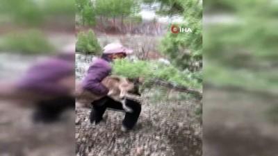dag kecisi -  Hasta dağ keçisi yavrusunu 4 kilometre sırtında taşıdı