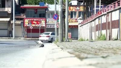 İzmir'in göbeğinde belgesellik görüntüler...Martı, ölü güvercini böyle yedi