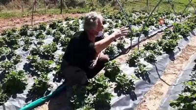 organik tarim -  15 yıldır ormanın ortasında organik tarım yaparak geçimini sağlıyor