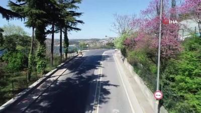 Korona günlerinde erguvanların açmasıyla İstanbul Boğazı rengarenk oldu