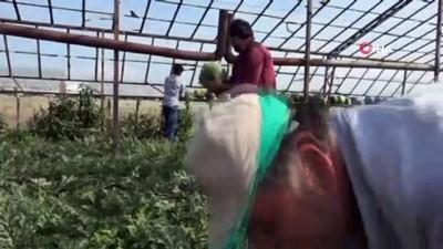 yerli uretim -  İthalatı duran karpuzda talep yerli üretimi patlattı