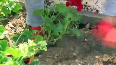 Bodrum çiçeklerle donatılıyor