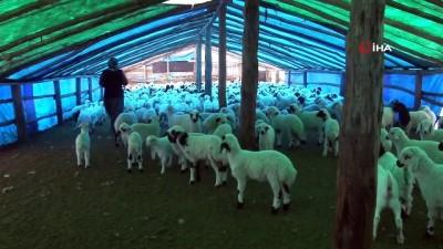 ilkbahar -  Şavak aşireti göçebe çobanlık yaparak geçimlerini sağlıyor