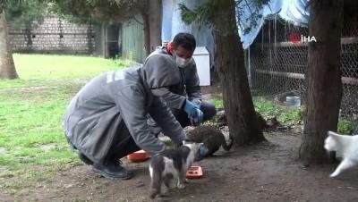 Kağıthane'de sokak hayvanları unutulmadı
