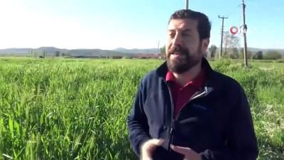 aliskanlik -  Sındırgı'da tarım seferberliği