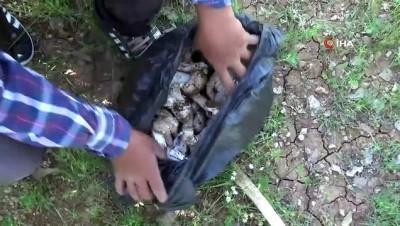 Araziden topladıkları mantarları yiyen 3 kişi zehirlendi