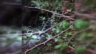 Antalya'da kuyuya düşen 5 yavru köpek kurtarıldı