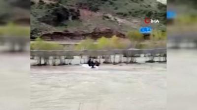 cagri merkezi -  Aras Nehri'ne düşen danayı AFAD ekipleri böyle kurtardı