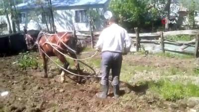 icmeler -  Varto'da kara sabanların yerini atlar aldı