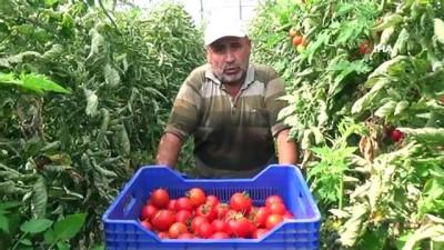 bayram tatili -  Çiftçiler bayramda da üretime ara vermedi