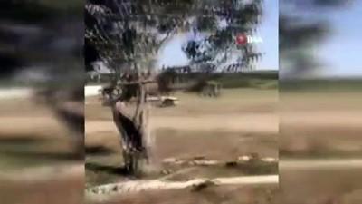 Fas'ta bir kişi arazisini ihlal ettiği için koyunları ezdi