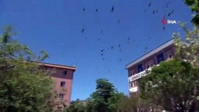 kamera -  Kısıtlamanın devam ettiği Van'da sokaklar güvercinlere kaldı