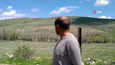 Sarıkız kabusu geri döndü... Et yiyen örümcek olarak bilinen 'Sarıkız' vatandaşları tedirgin etti